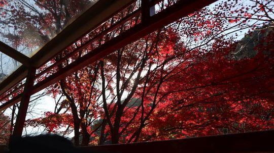 kyoto20_09.jpg
